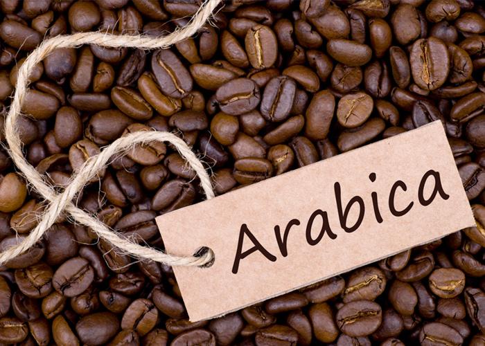 قهوه عربی یا عربیکا نوعی دانه است که تقریباً ۸۰٪ از تولید جهانی را تسخیر می کند